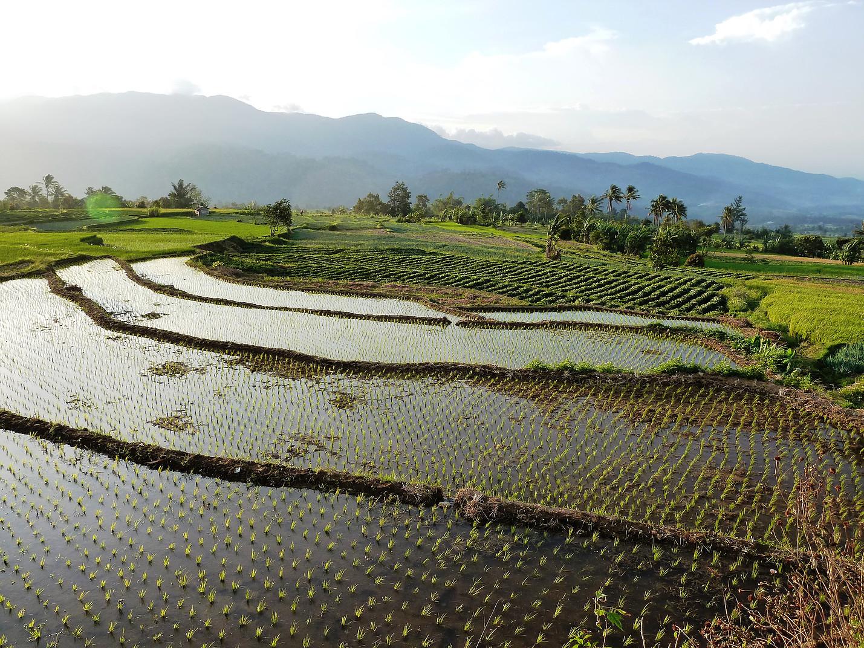 Voyage vélo Indonésie, Voyages d'Ailleurs, rizières en terrasses, Solok, Sumatra, Indonésie