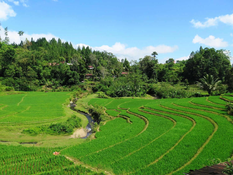 Voyage vélo Indonésie, Voyages d'Ailleurs, Rizières en terrasses, Mamasa, Sulawesi, Indonésie