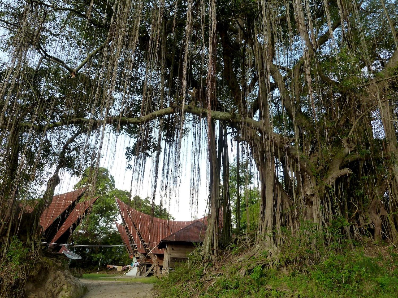 Voyage vélo Indonésie, Voyages d'Ailleurs, maisons traditionnelles batak, Samosir, Sumatra